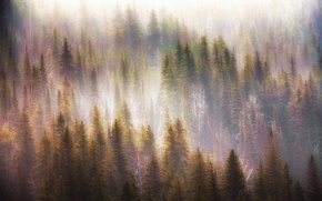 Picture forest, light, nature, fog, morning