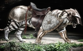 Picture armor, tiger, predator, warrior, tora