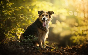 Wallpaper bokeh, dog, Monty, autumn
