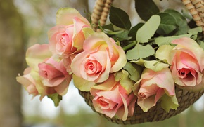 Picture leaves, flowers, nature, background, rose, roses, bouquet, petals, gentle, pink, basket, buds, hanging, composition, pots