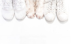 Picture background, shoes, dog