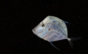 Picture background, fish, flat