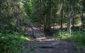 Picture Forest, Track, The bridge