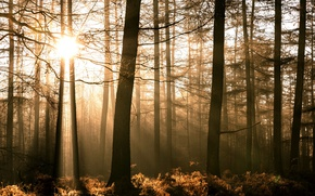 Picture forest, light, nature