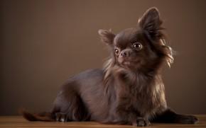 Wallpaper stay, Puppy, animal, dog