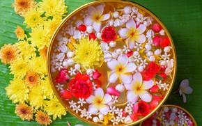 Wallpaper chrysanthemum, water, plumeria, flowers