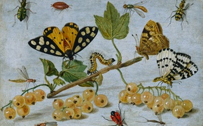 Wallpaper caterpillar, currants, butterfly, Insects and Fruit, Jan van Kessel the elder, still life, berries, oil, ...