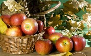 Wallpaper red, autumn, Apples