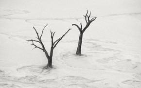 Picture landscape, tree, desert