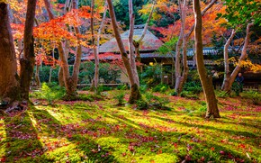 Wallpaper autumn, grass, leaves, the sun, trees, Park, Japan, Kyoto
