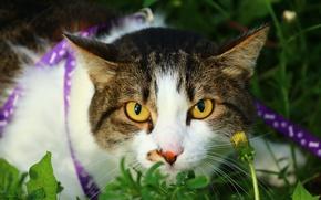 Wallpaper eyes, cat, look, weed