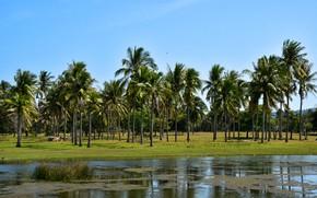 Picture greens, the sky, the sun, trees, birds, tropics, palm trees, Thailand, river, Phraya Nakhon Cave