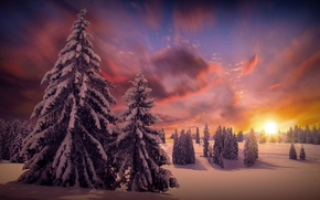 Picture winter, forest, the sun, clouds, snow, trees, nature, tree