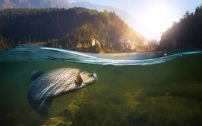 Wallpaper underwater, nature, fish, Fishing, water