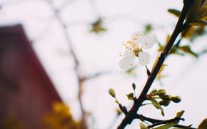 Picture flowers, spring, beautiful, Priroda