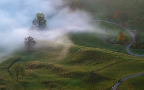 Picture autumn, trees, nature, fog, morning, meadows