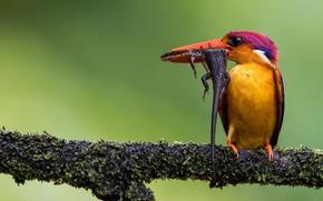 Picture bird, branch, lizard, hunter, Kingfisher, catch