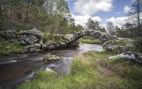 Picture landscape, nature, beauty, stone bridge