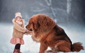 Picture winter, snow, mood, dog, friendship, girl, friends, dog, Tibetan Mastiff, Anna Melnikova