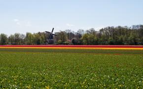 Wallpaper nature, field, Landscape, mill, flowers