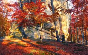 Wallpaper forest, autumn, the sun, leaves, Transcarpathia, trees, Ukraine, stones