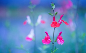 Picture field, nature, plant, petals, meadow