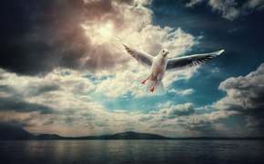 Picture clouds, Seagull, flight, into the blue