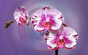 Picture nature, paint, Blik, Orchid, inflorescence