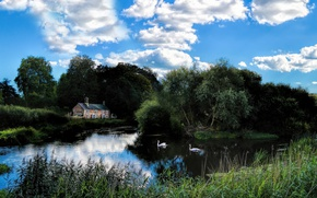 Picture lake, house, swans
