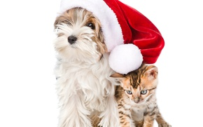 Picture kitty, hat, Christmas, puppy, Christmas, New Year, Dogs, Yorkshire Terrier, Cats