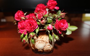 Picture flower, rose, red rose