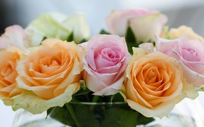 Picture glass, flowers, close-up, background, roses, bouquet, light, bowl, pink, orange, buds, composition, roses