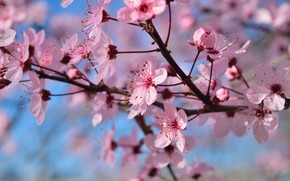 Picture flowers, branches, tree, spring, flowering