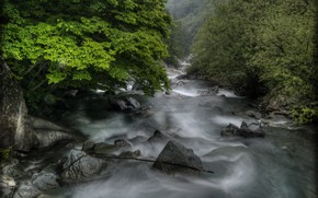Picture trees, river, stones, rapid