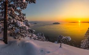 Picture winter, snow, trees, landscape, nature, lake, pine, Karelia, Ladoga