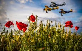Picture field, summer, the sky, clouds, flight, aviation, flowers, Mac, Maki, aircraft, three, trio, poppy field, …