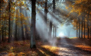 Picture dawn, the rays of the sun, autumn Park, the road into the distance