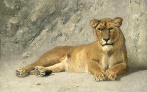 Picture cat, animals, picture, Jan van Essen, Resting Lion