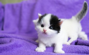 Wallpaper cats, kitty, background, lilac, black and white, small, baby, muzzle, kittens, fabric, white, plaid, kitty, ...