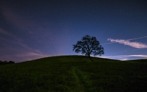 Picture the sky, stars, night, tree, silhouette