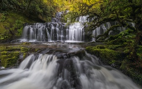 Picture forest, river, waterfall, New Zealand, cascade, New Zealand, Purakaunui Falls, Purakaunui River