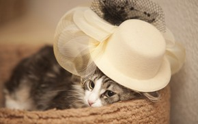 Wallpaper hat, cat, Madame