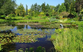 Picture trees, landscape, pond, landscape design