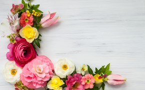 Picture flowers, pink, flowers, beautiful, composition, frame, floral