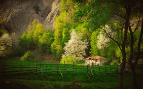 Picture grass, trees, house, rocks, spring