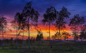 Picture trees, sunset, nature