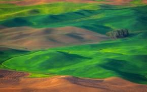 Picture field, grass, trees, hills, USA, Washington