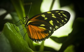 Picture macro, butterfly, insect