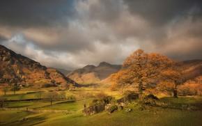 Wallpaper trees, mountains, autumn, England, Cumbria