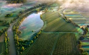 Wallpaper light, trees, fog, lake, river, field, morning